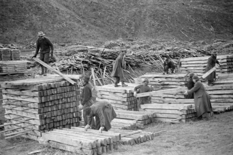 Members of the British Honduras Forestry Unit stacking planks of wood in a forest